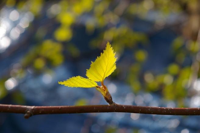 leaf-1359023_1280