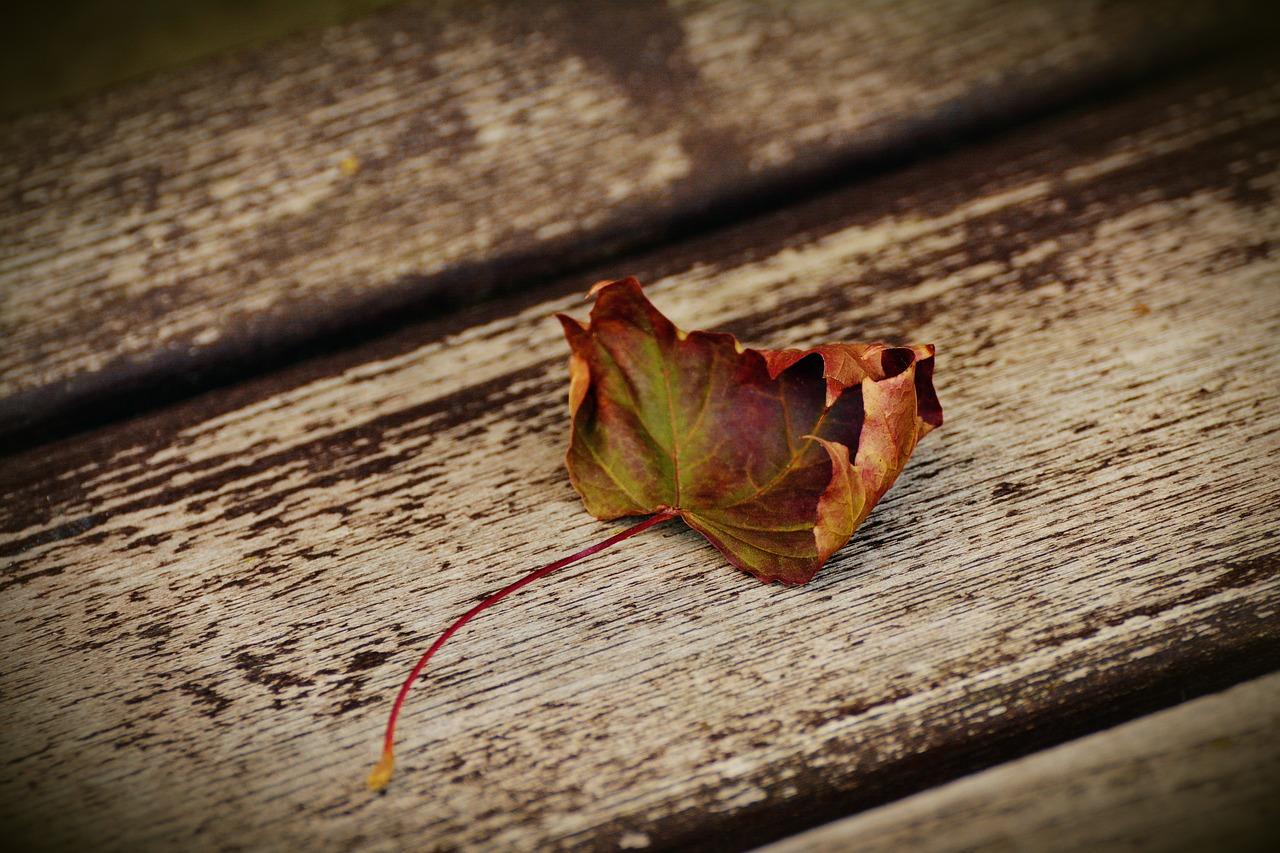 autumn-leaf-1728845_1280