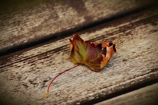 autumn-leaf-1728845_1280