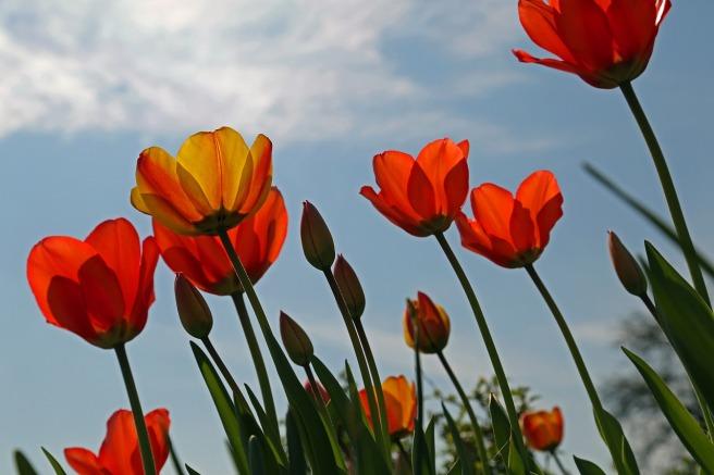 flowers-745402_1280