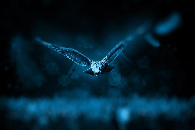 owl-518838_1280